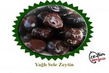Yağlı Sele Zeytin (1000 gr)
