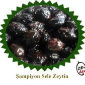 Şampiyon Sele Zeytin 1 KG